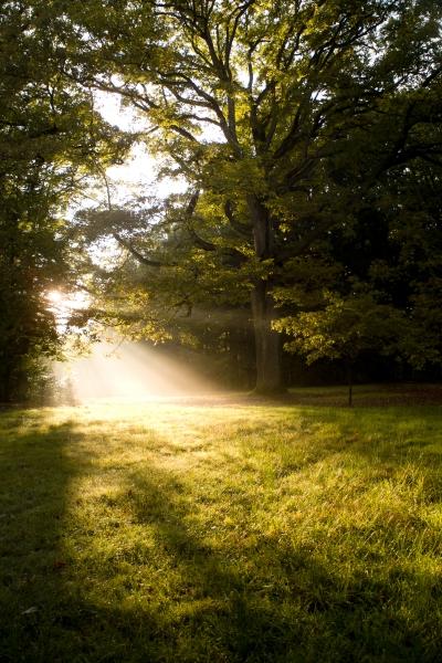 Petit matin dans les bois